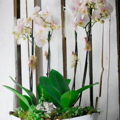 Orquídeas en Pamplona