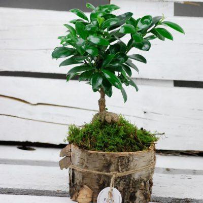 Plantas en Pamplona